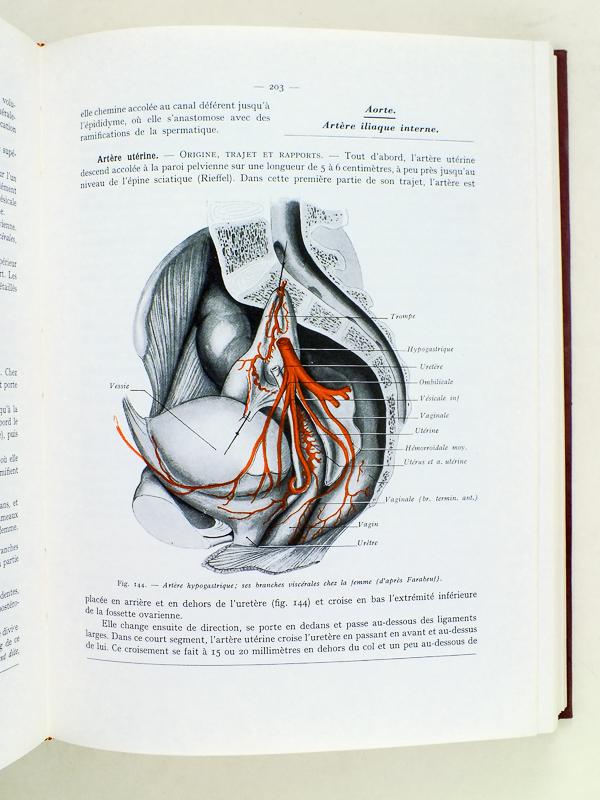 rouviere anatomie